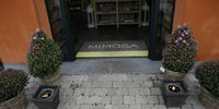 Mimosa - Homepagina